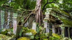 Boom in de tempel van Angkor Wat Siem oogst, het koninkrijk van Kambodja stock foto's
