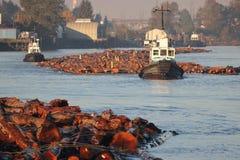 Boom de Tug Boat Fleet Moving Log images libres de droits
