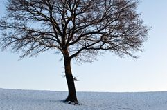 Boom in de winter royalty-vrije stock foto's