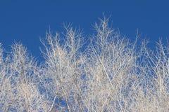 Boom in de winter Stock Fotografie