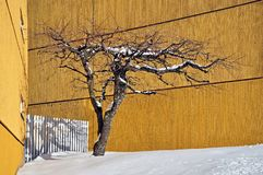 Boom in de winter onder gele huizen royalty-vrije stock foto's