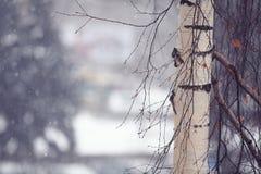 Boom in de winterbos Royalty-vrije Stock Afbeeldingen