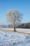 Boom in de winterslandschap Stock Foto