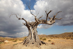 Boom in de woestijn royalty-vrije stock afbeelding