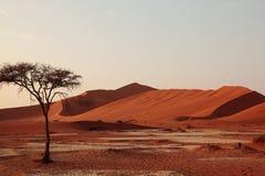 Boom in de woestijn Royalty-vrije Stock Fotografie