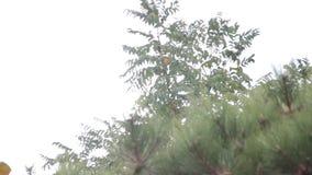 Boom in de zomer van het windonweer stock videobeelden