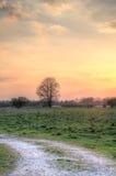 Boom in de zonsondergang Royalty-vrije Stock Afbeeldingen
