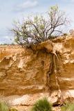 Boom die in Bardenas Reales, Navarra, Spanje overleeft royalty-vrije stock foto's
