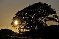 Boom die bij zonsondergang wordt gesilhouetteerd Royalty-vrije Stock Fotografie