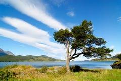 Boom die door de wind in Patagonië wordt gevormd Royalty-vrije Stock Afbeelding