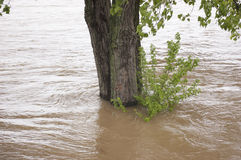 Boom die door Floodwater wordt omringd Stock Foto's