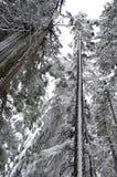 boom die door sneeuw tegen hemel wordt behandeld Royalty-vrije Stock Afbeelding