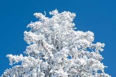 Boom die door sneeuw wordt behandeld stock afbeelding