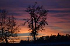 Boom die met de zonsopgang wekken Royalty-vrije Stock Foto