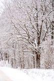 Boom die met Sneeuw wordt behandeld royalty-vrije stock afbeeldingen