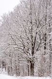 Boom die met Sneeuw wordt behandeld stock afbeeldingen