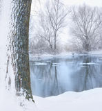 Boom die met sneeuw wordt behandeld Stock Foto