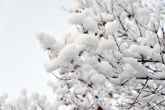 Boom die met Sneeuw wordt behandeld Stock Fotografie