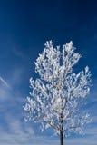 Boom die met sneeuw wordt behandeld Stock Foto's