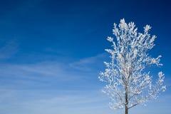 Boom die met sneeuw wordt behandeld Royalty-vrije Stock Afbeelding