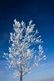 Boom die met sneeuw wordt behandeld Royalty-vrije Stock Fotografie