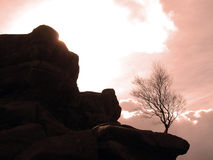 Boom die onder rotsen overleeft stock afbeeldingen