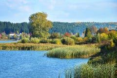 Boom door de rivier Royalty-vrije Stock Afbeeldingen