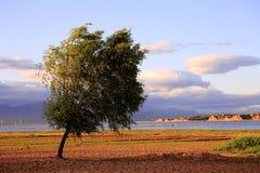 Boom door reservoir Royalty-vrije Stock Afbeelding