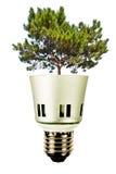 Boom in een lightbulb, groen energieconcept Stock Foto's