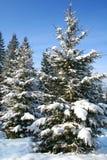 boom een spar in-gebied dat door witte sneeuw wordt behandeld is Royalty-vrije Stock Foto's