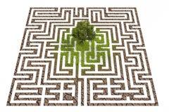 Boom in eindeloos labyrint wordt verloren dat Royalty-vrije Stock Foto's