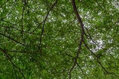 Boom en bladeren Stock Afbeeldingen