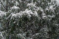 Boom en bladeren in sneeuw in de winter wordt behandeld die royalty-vrije stock afbeelding