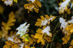 Boom en bladeren in sneeuw in de winter wordt behandeld die stock fotografie