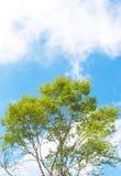 Boom en blauwe hemel Stock Foto
