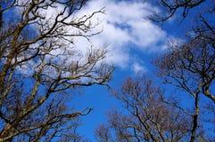 Boom en blauwe hemel royalty-vrije stock foto's