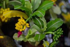 Boom en bloemenmodellen Royalty-vrije Stock Afbeeldingen
