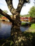 Boom en brug op het meer Stock Foto