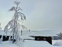 Boom en de bouw die door dikke sneeuwdekking wordt behandeld stock afbeelding