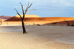 Boom en duinen in de woestijn Royalty-vrije Stock Foto