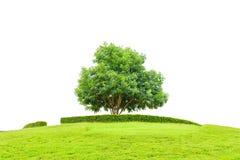 Boom en gebied van gras op kleine die berg voor succesconcept op een witte achtergrond met het knippen van weg wordt geïsoleerd Royalty-vrije Stock Afbeelding