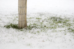 Boom en gras in sneeuw Stock Afbeeldingen