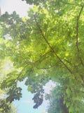 boom en hemel koele aardig stock foto