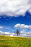 Boom en hemel met wolken Stock Fotografie