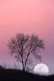 Boom en maan Stock Afbeeldingen