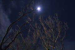 Boom en maan bij nacht Royalty-vrije Stock Afbeeldingen