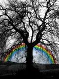 boom en regenboog Royalty-vrije Stock Foto's