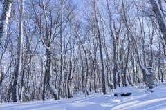 Boom en sneeuw Stock Afbeelding