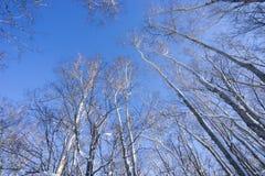 Boom en sneeuw Stock Afbeeldingen