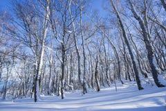 Boom en sneeuw Stock Foto's
